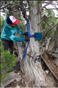 Placing a Song Meter (acoustic recorder) and camera trap in the Piceance Basin